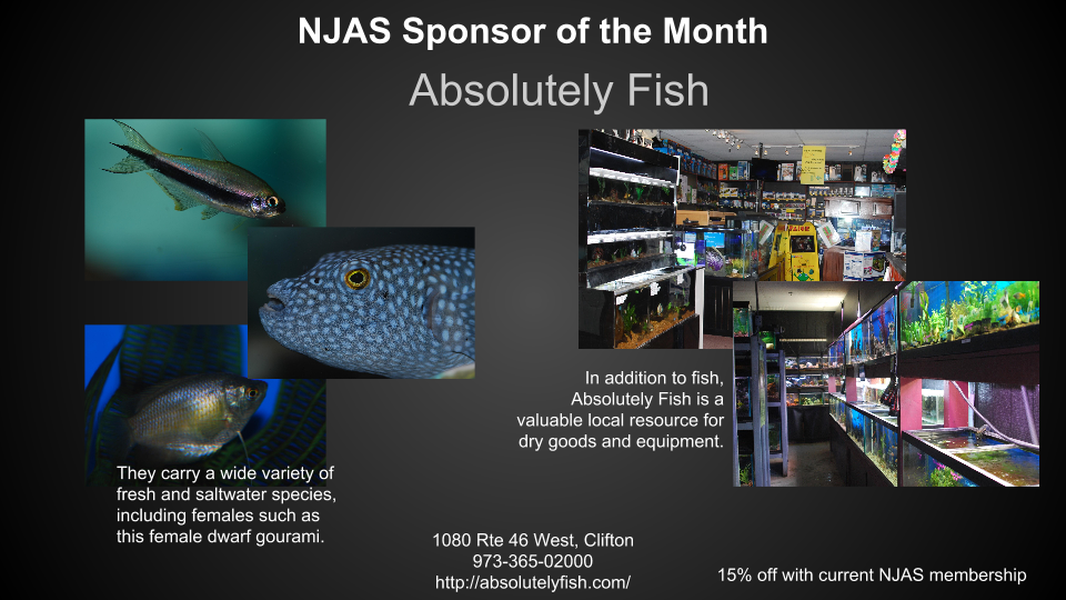 Absolutely Fish Sponsor of the Month