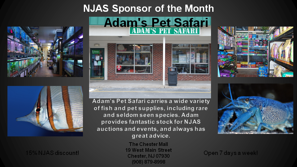 Adam's Pet Safari Sponsor of the Month