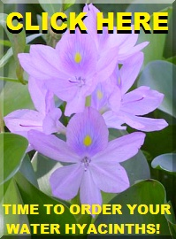 Click to get in on Ted's Water Hyacinth Order!